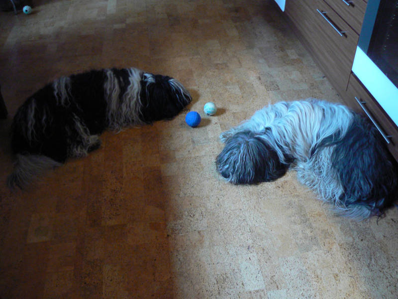 koirahieronnan-jälkeen