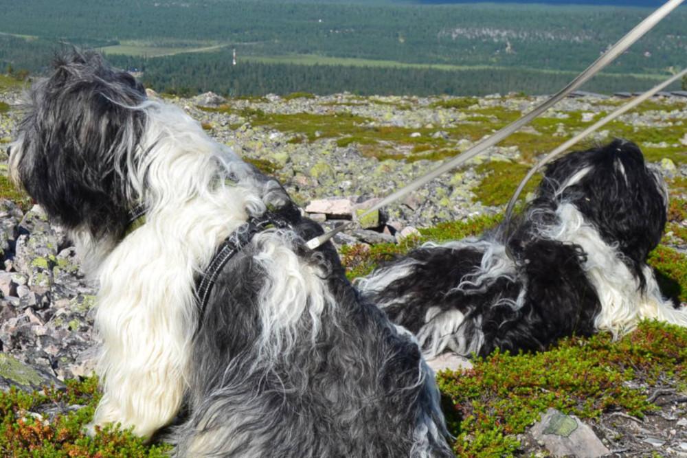 Koirakeskus Haukkuvaaran hoitoajat